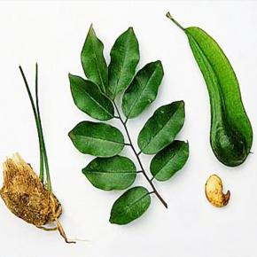balsam-peru-oil-img