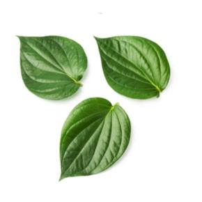 betel-leaf-oil-img