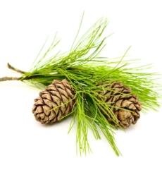 cedar-wood-oil-img