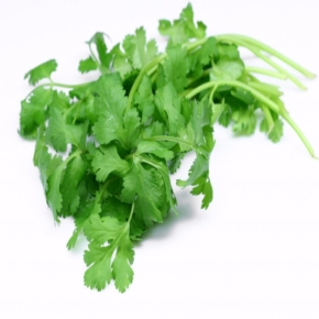 coriander-oilimg1