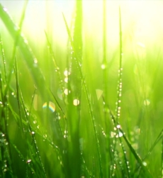 freshcutgrass-img1