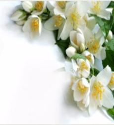 jasmine-oil-pg-grade-img