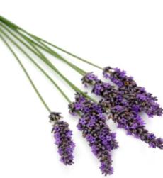 lavender (1)