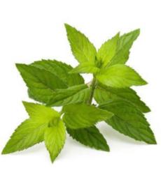 peppermint-oil-img (1)