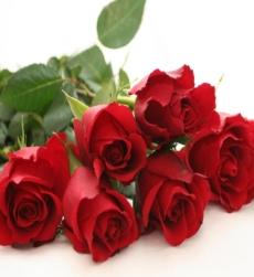 rosegarden_img1