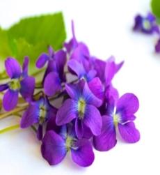 violet_img1