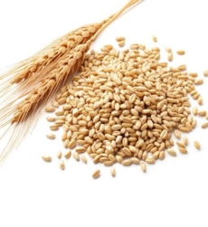 wheatgermimg1