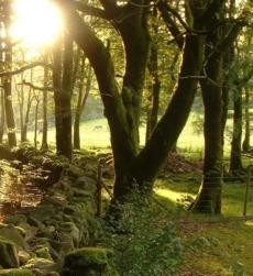 woodland_img1
